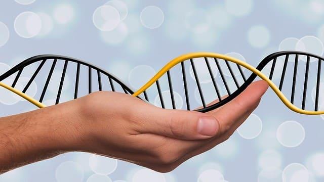 Генетик (Генетика)