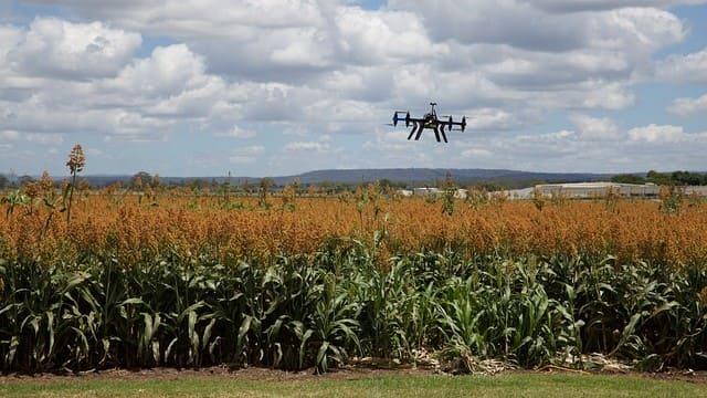 Технолог сільськогосподарського виробництва